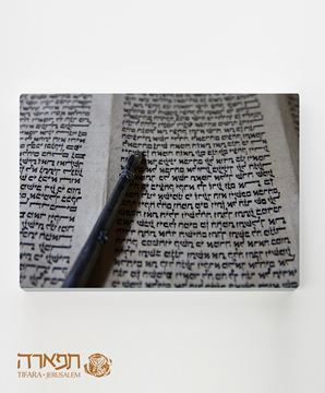 Picture of Torah's hand